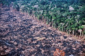Rain Forest In Brazil Are Cleared And Burned By Settlers For Farmland