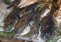 Fugu, pesce palla - Giappone