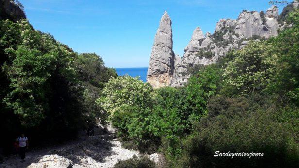 Punta Caroddi
