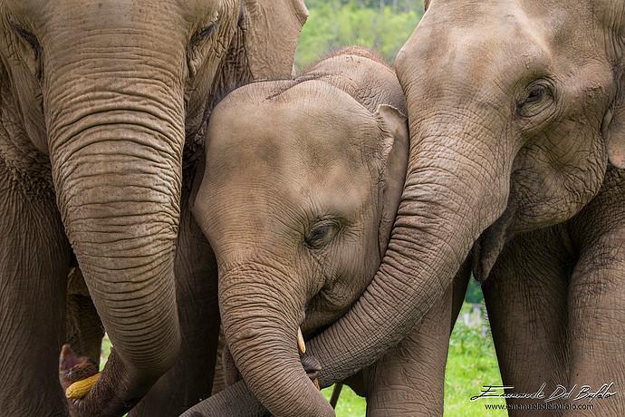 Tailandia - Elefantini
