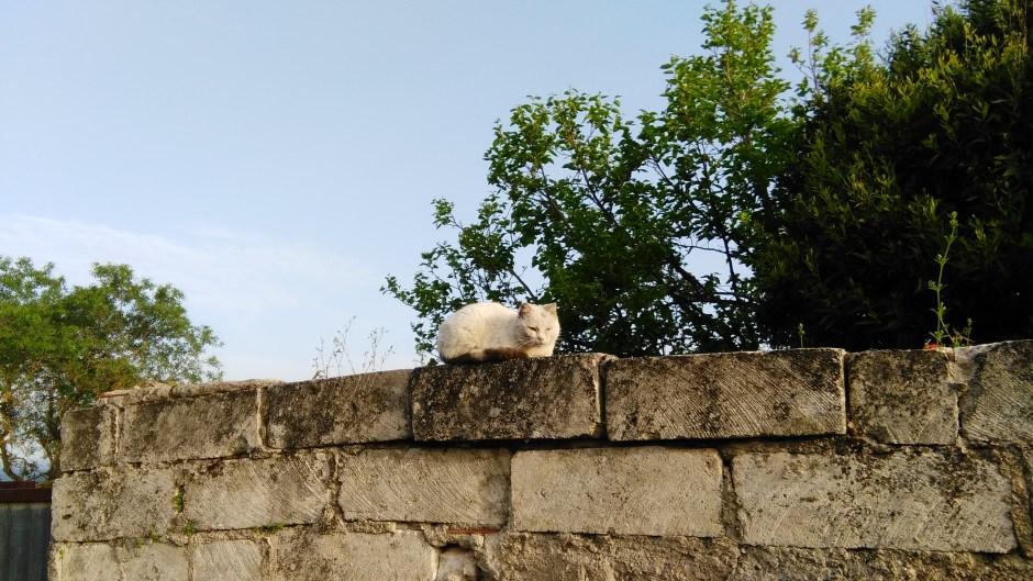 Un gatto sornione di Monteleone Roccadoria