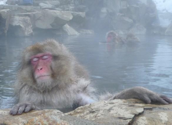 Earth Monkey