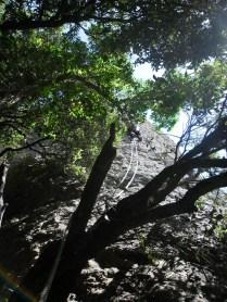 Progressió L1 vista entre arbres