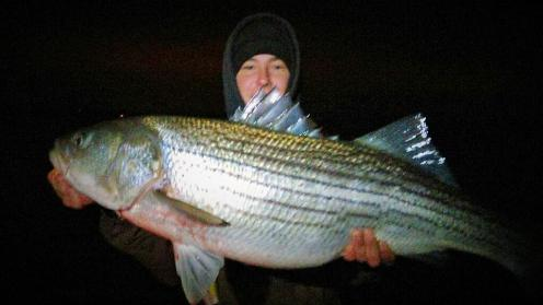 Sarges Bait and Tackle Chesapeake Bay Fishing Report