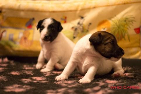 D-pups_3wks (7 of 37)