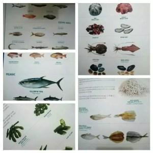 Berbagai hasil laut yang di-frozen KML Food