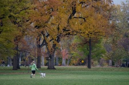 犬の散歩ダイエットで効果的に痩せるには?消費カロリーは?