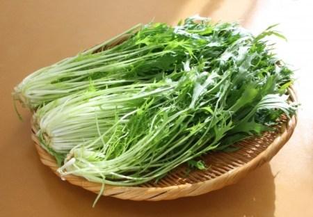 新鮮な水菜の選び方と保存方法!効能・効果は?