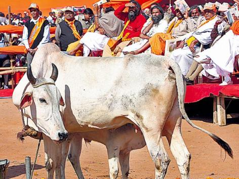 Haryana Government Passes A Bill Banning Cow Slaughter