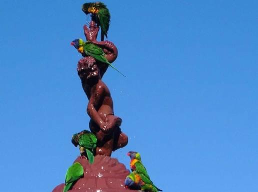 Parrots enjoying the water