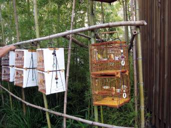 Purpose built bamboo structure