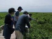 湿原の小さな植物に目を懲らす参加者ら