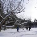【案内】世界湿地の日記念「サロベツ・スノーシューハイク」in砂丘林