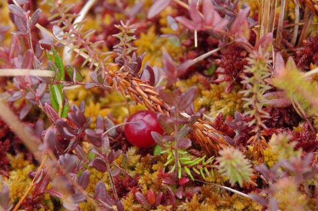 ミズゴケ湿原の小さな秋