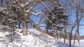 冬の砂丘林