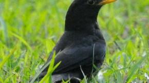 中国広州の鳥類