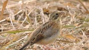 9月の小鳥