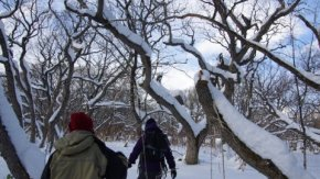 森と湿原スノーシューハイクツアー&レンタル