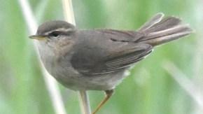 サハリンの鳥類 バイカル湾 その他小鳥