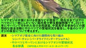 シマアオジ報告会(10月5日)