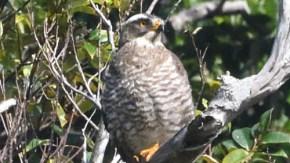 沖縄の鳥類2