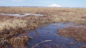 サロベツ湿原の様子~小さい春みつけた~(200322)