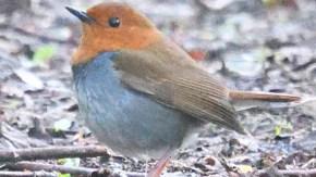 地面を歩く小鳥たち