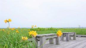 サロベツ湿原最新開花情報+木道のようす210701