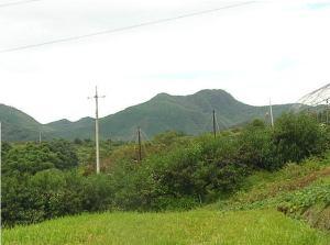 tanayama01