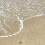 砂浜の侵食