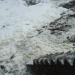 海の花~笹川流れ