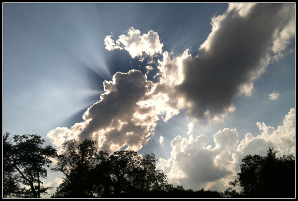 clouds-above-the-trees