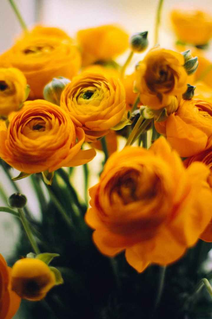 close up photo of yellow garden roses