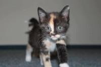 2012-09-14: mała kotka szuka dobrego domu w Warszawie