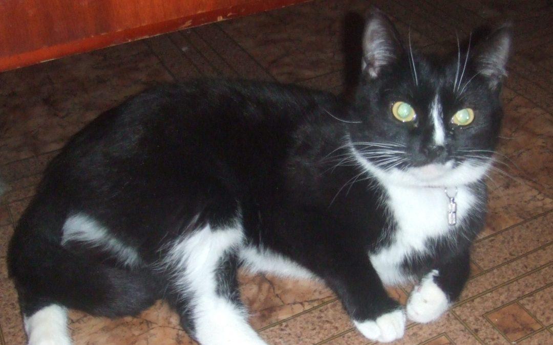 2014-05-24: zagineła kotka!