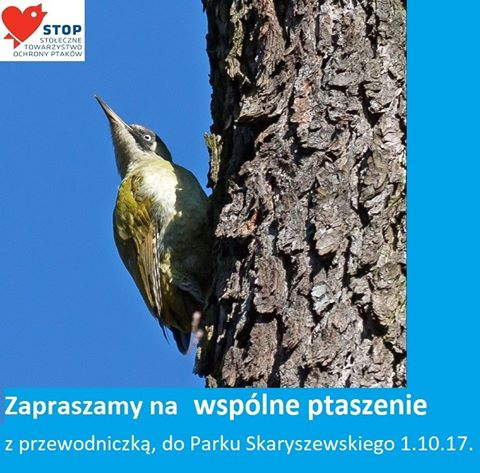 2017-10-01: spacer ornitologiczny z okazji Europejskich Dni Ptaków