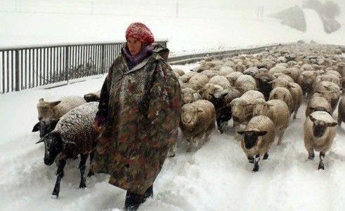 2019-07-01: Przegląd KINA Szwajcarskiego: Zimowi nomadowie