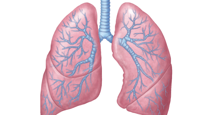 Your lung microbiome &  respiratory health