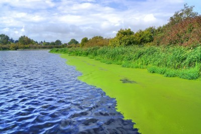 Blue-Green algae: What do you need to know?