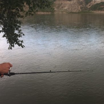 Catch this: Fishing in Edmonton better than you may think