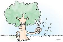 19 janeiro Época da poda das árvores na cidade.