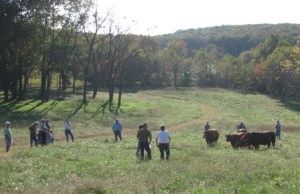 Pasture Walk at Sassafras Valley Ranch