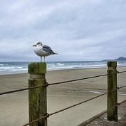Snapseed_Final-2-Gull-Beach-DSC04019