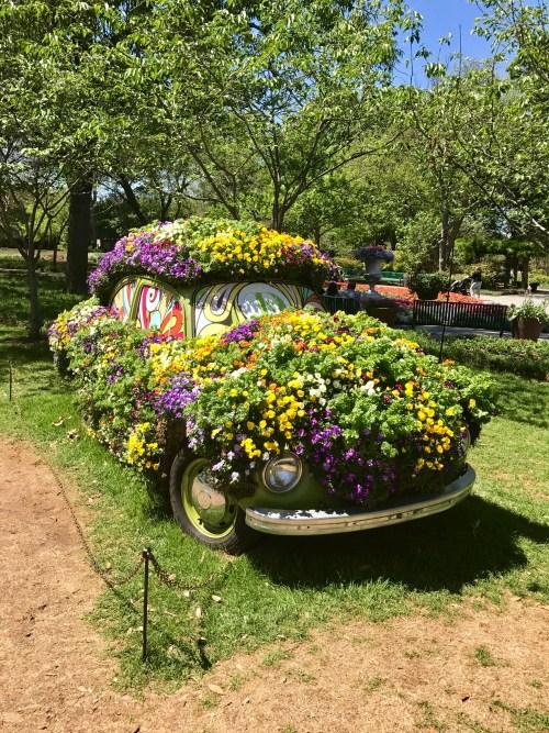 Dallas Arboretum Volkswagon beetle flowers