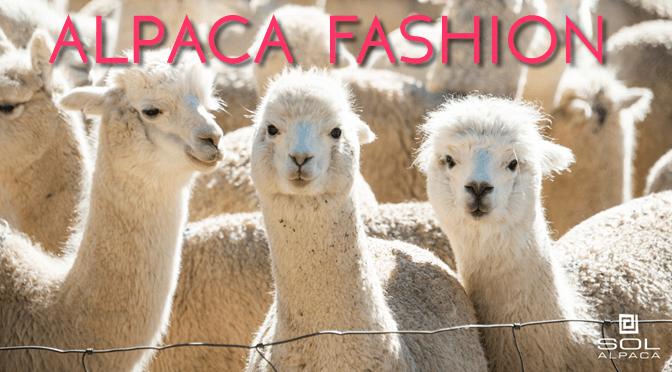 alpaca-characteristics-fashion-sol-alpaca