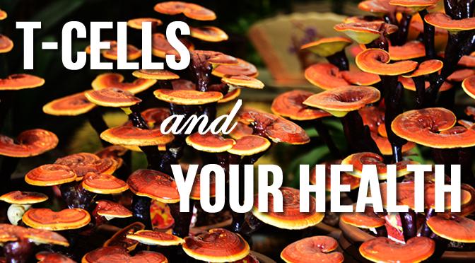 tcells feature reishi mushroom