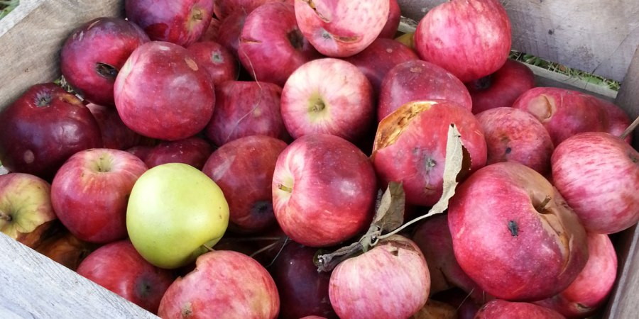 Apple Bins with pre-picked apples
