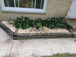 Garden box with mulch - Different angle