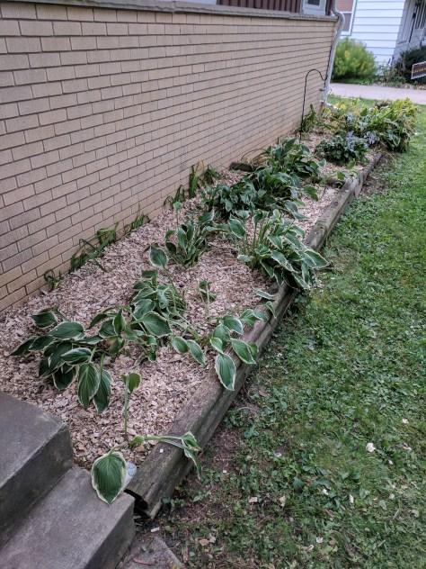 Garden box with mulch