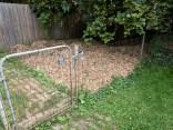 Vegetable garden, mulch